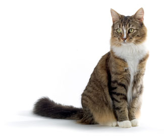cat thyroid disorder treatment, contact Thyro-Cat