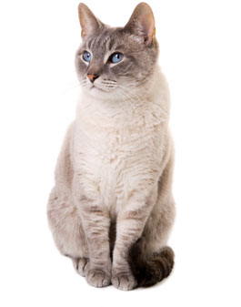 Veterinary Referrals for cat hyperthyroidism