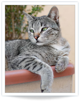 thyro-cat hyperthyroidism treatment centers